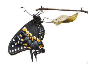 butterfly_shutterstock_106381790