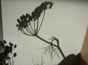 October shadow