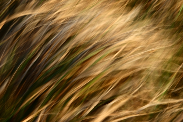 Wind_abstract_shutterstock_81439480