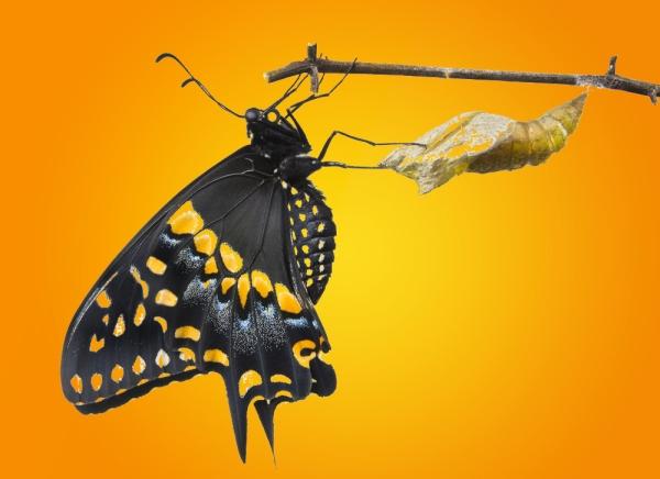 ButterflyAndCrys