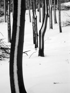trees-winter